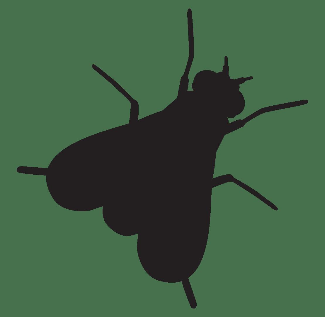 Ant treatment in Massillon, Canton, Stark County